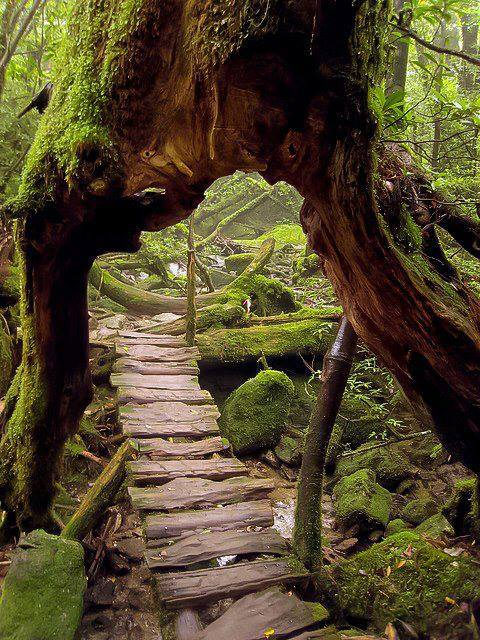 Primeval-Forest-Shiratani-Unsuikyo-Ravine-Japan