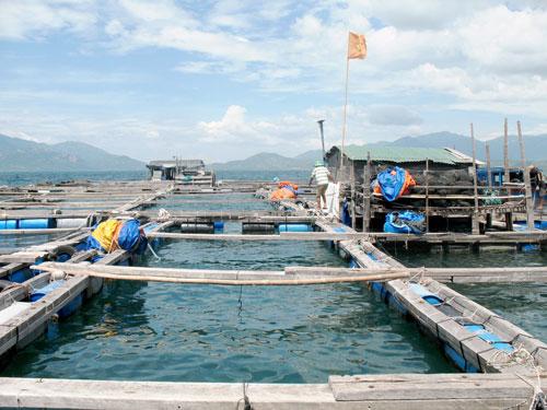 Một bè cá của người Trung Quốc ở Cam Ranh